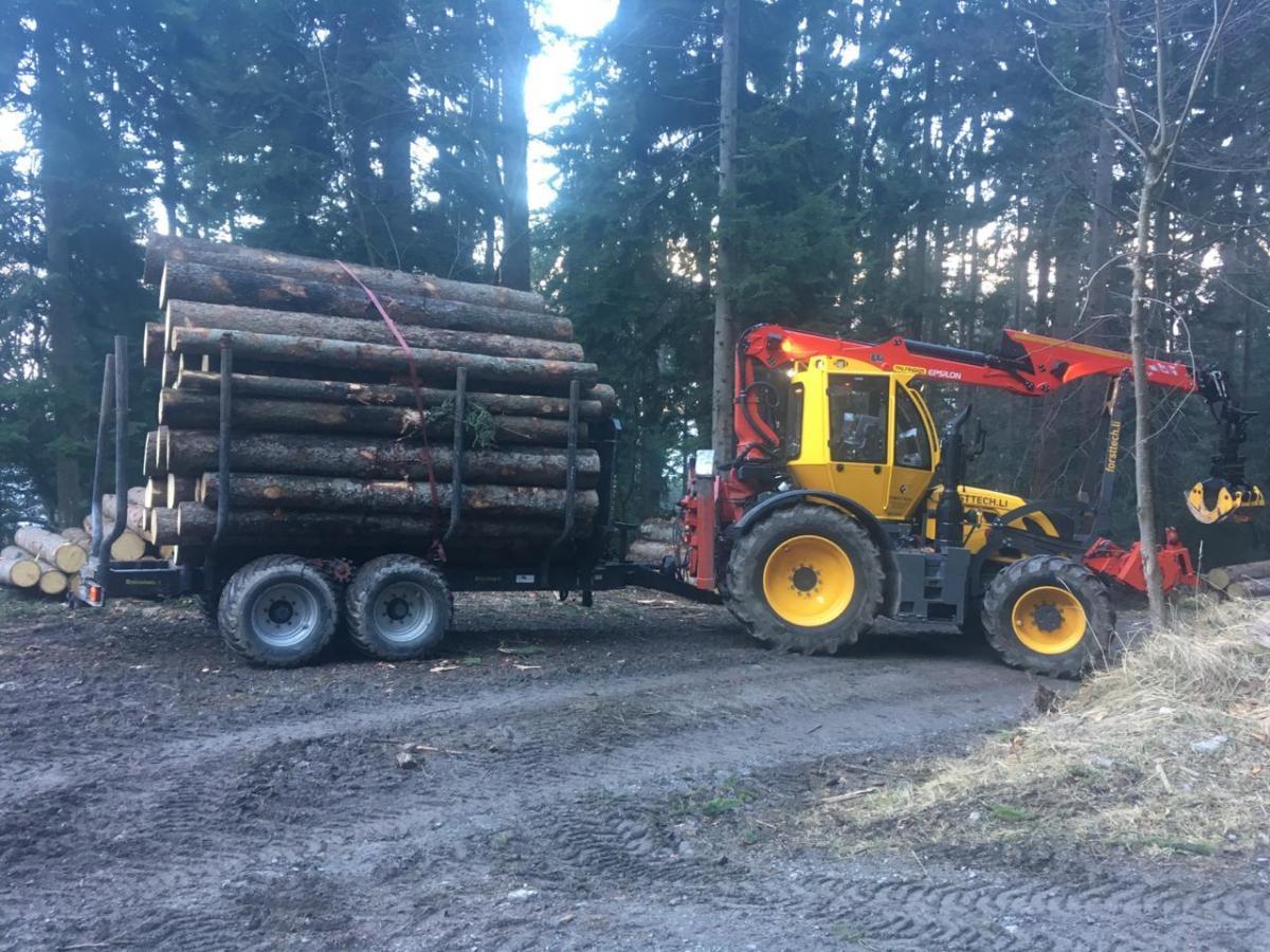 Brennholz aus dem Forst
