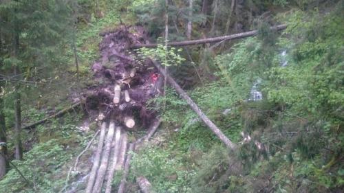 Waldpflege